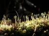 mosses-in-bloom