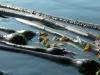 sensuous-kelp