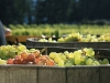 harvest-festival-Saturna Photo ©  Andrée Fredette