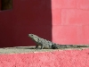 House for Sale - Iguana Optional - Holbox Island, Mexico