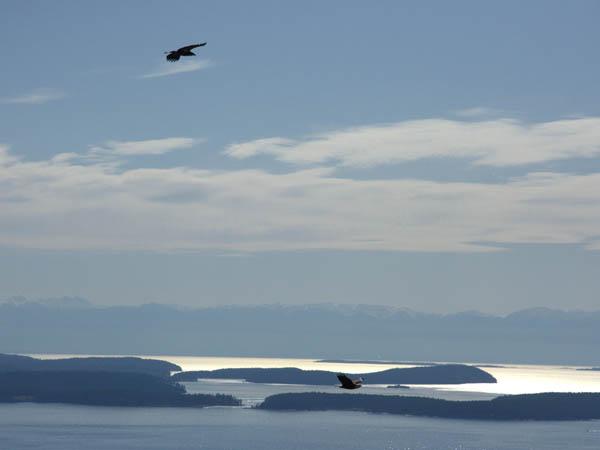 Eagles flying, San Juan islands in background