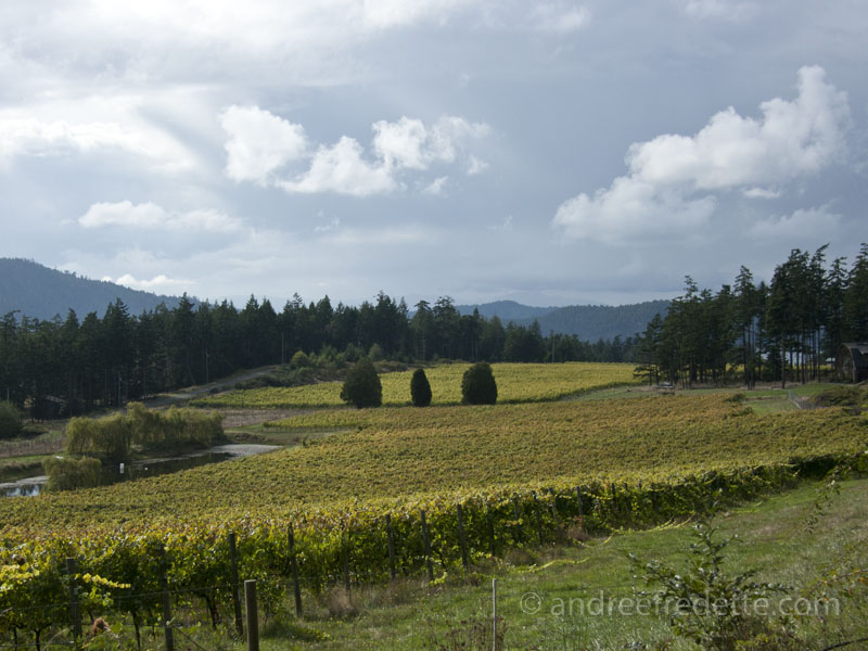 Rural Landscape, Saturna Island - Saturna Family Vineyards