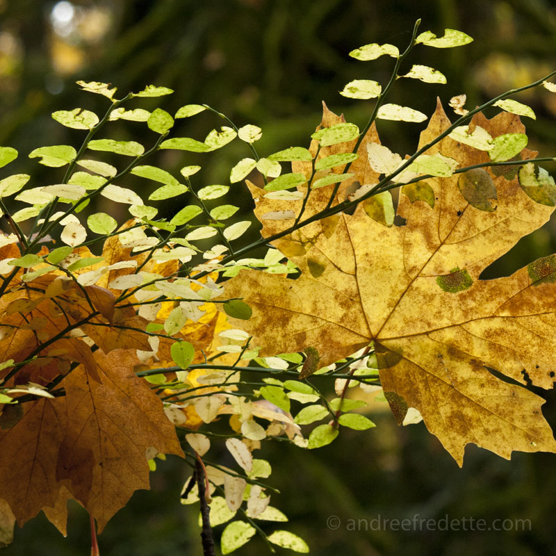 Fall Abstract at Goldstream Park - © Andrée Fredette