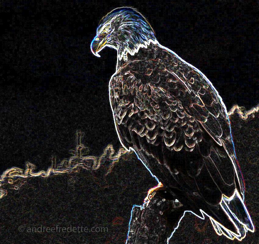 Neon Eagle, October 25, 2014 - © Andrée Fredette