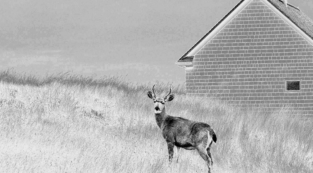 East Point Buck, Saturna. Photo © Andrée Fredette