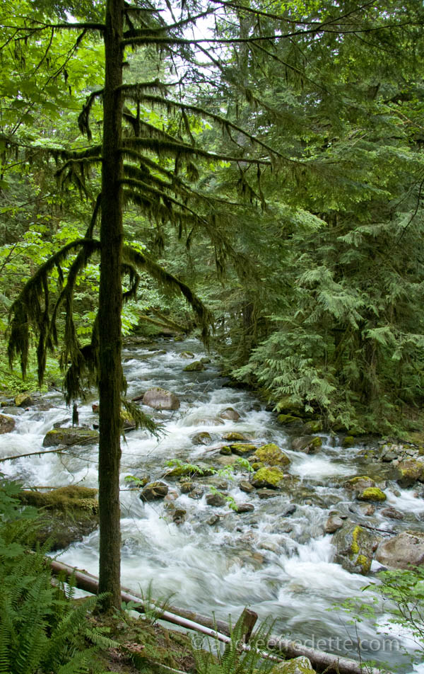 Spring Water in BC. Photo © Andrée Fredette