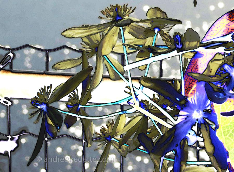 Winter Clematis Blooms, Funky Filter Play. Photo © Andrée Fredette