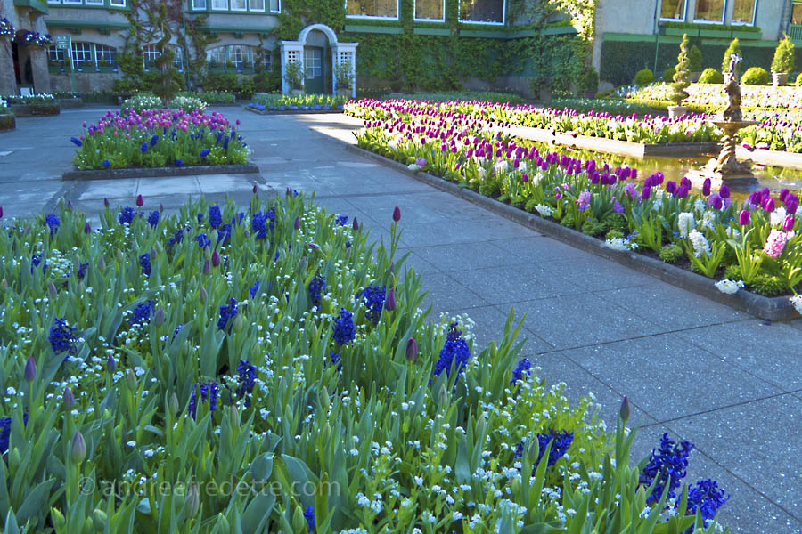 Italian Garden at Butchart Gardens. Photo © Andrée Fredette
