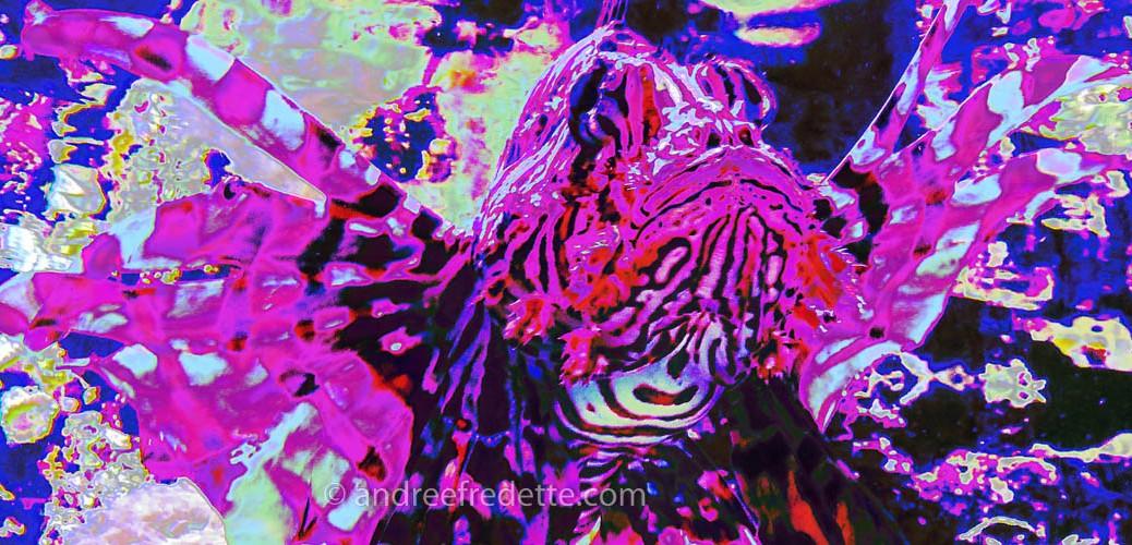 Lion Fish close-up. Photo © Andrée Fredette