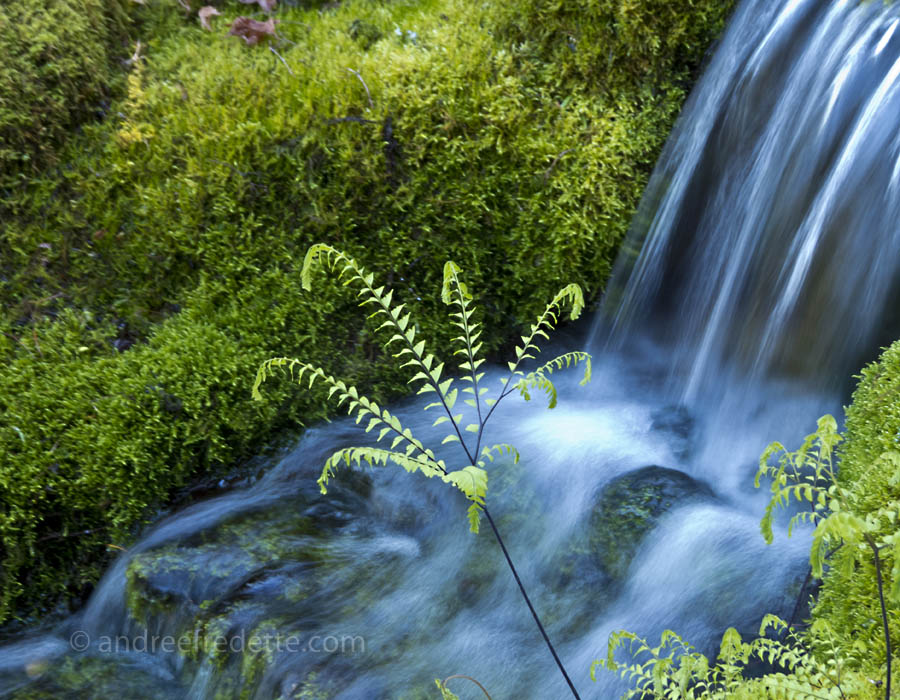 Delicate fern before a babbling brook. Photo by Andrée Fredette