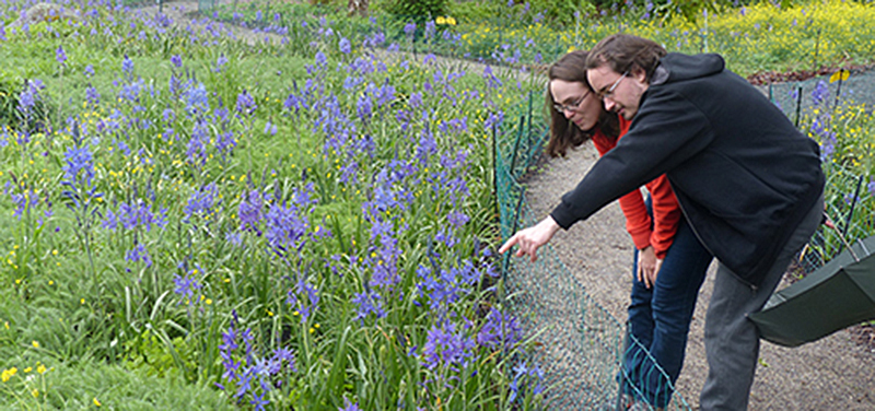 Camas Lilies at Fort Rodd Hill Park. Photo: Parks Canada
