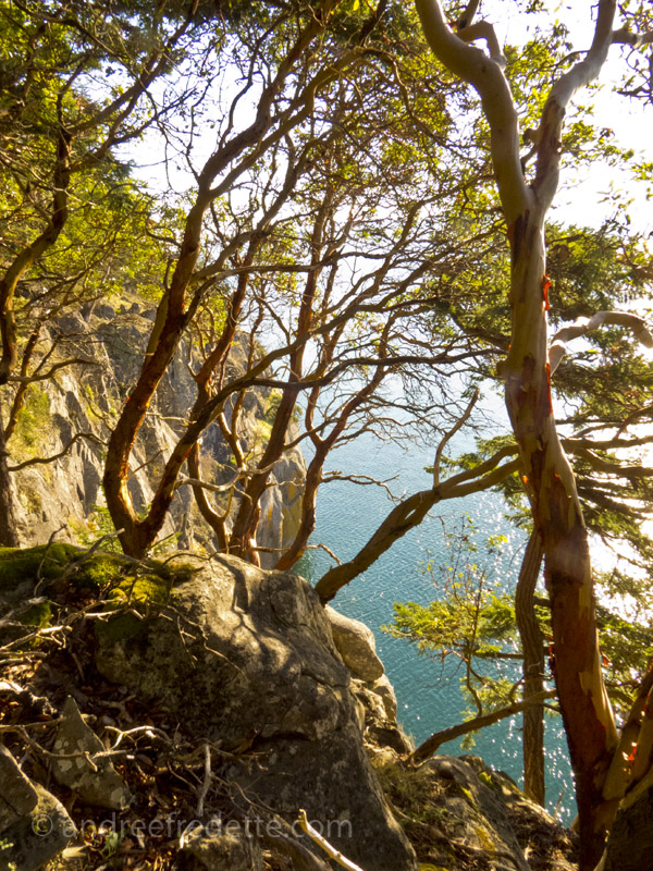 Sunny on a bluff, Saturna Island. Photo by Andrée Fredette