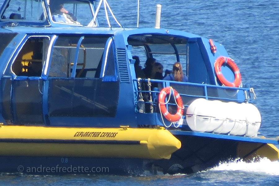 Whale Watchers too close, boat ID Explorathor Express. Photo  © Andrée Fredette
