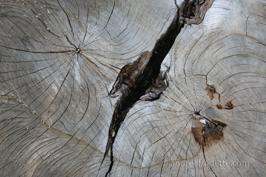 Growth lines, saw marks in hardwood. Photo by Andrée Fredette