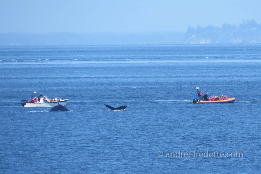 Whale watchers near Saturna Island, May 30, 2015, 2 pm. Photo © Andrée Fredette