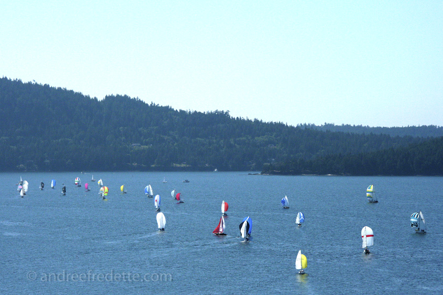 Regata time, with spinnakers. Photo by Andrée Fredette