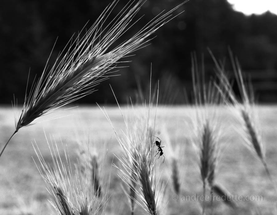 Grass Denizen. Photo © Andrée Fredette