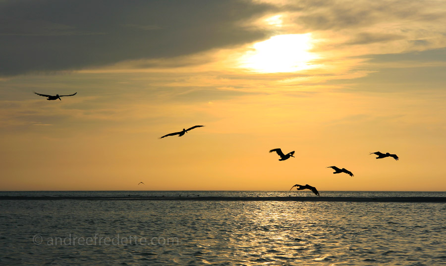 Pelican Squadron at sunset, Holbox Island. Photo by Andrée Fredette