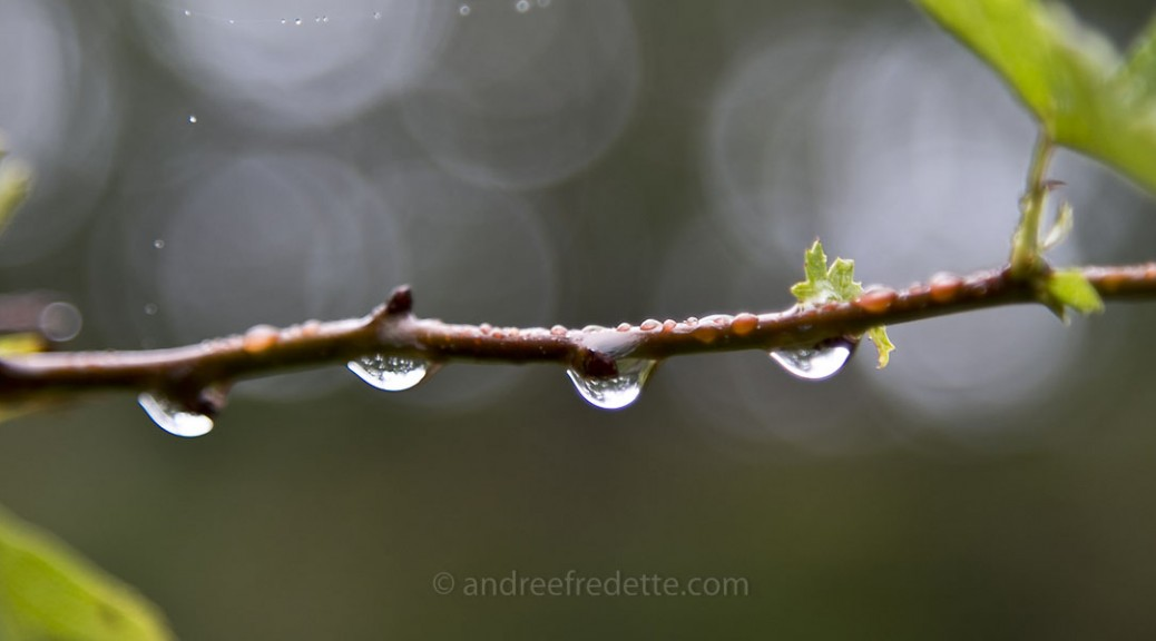 Rainy Day. Photo by Andrée Fredette