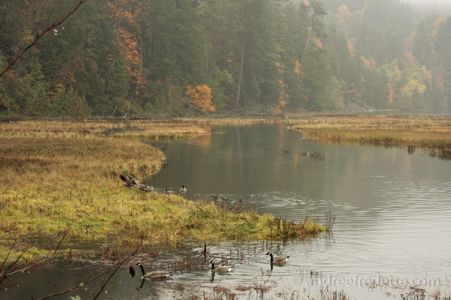 Salt Marsh at Goldstream, Vancouver Island, BC. Photo by Andrée Fredette