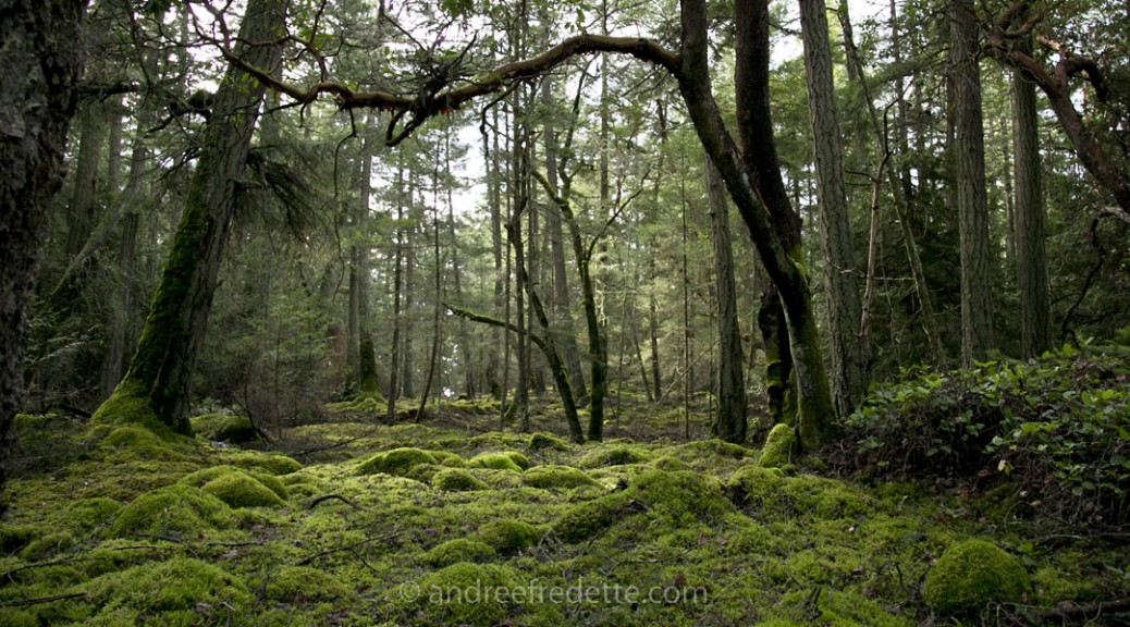 Emerald mosses on the forest floor, Saturna Island, BC. Photo by Andrée Fredette