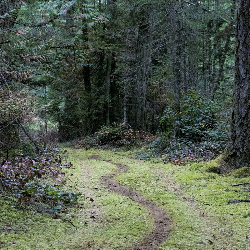 Forest path, into the green. Photo by Andrée Fredette