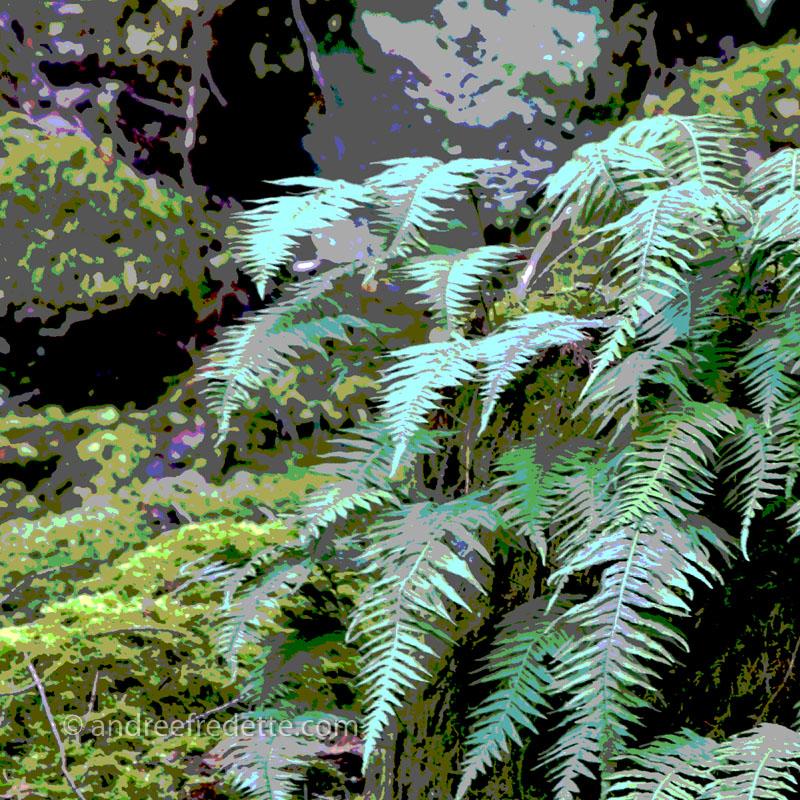Ferns on rock pillar. Photo by Andrée Fredette