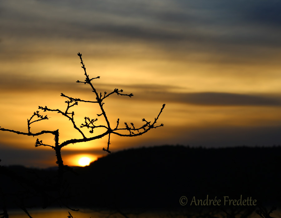 Mellow sundown, through the Garry Oak. Photo by Andrée Fredette