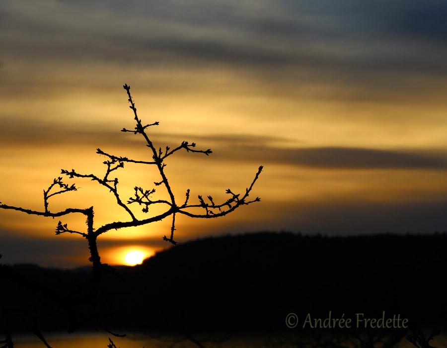 Mellow sundown, through the Garry Oak. Photo by Andrée Fredette