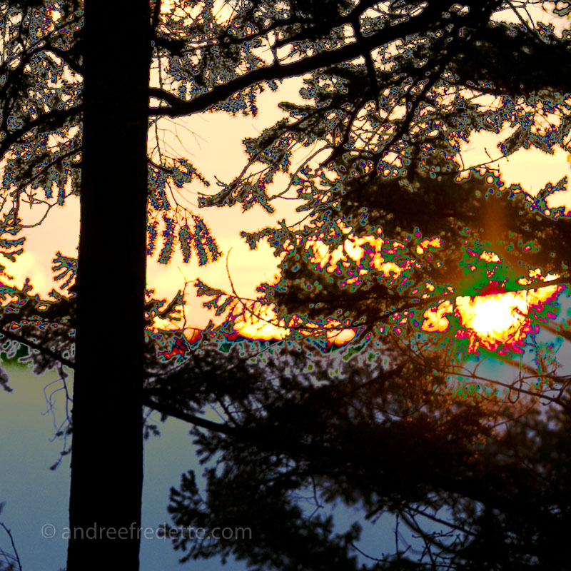 Sunset through the trees. Photo by Andrée Fredette
