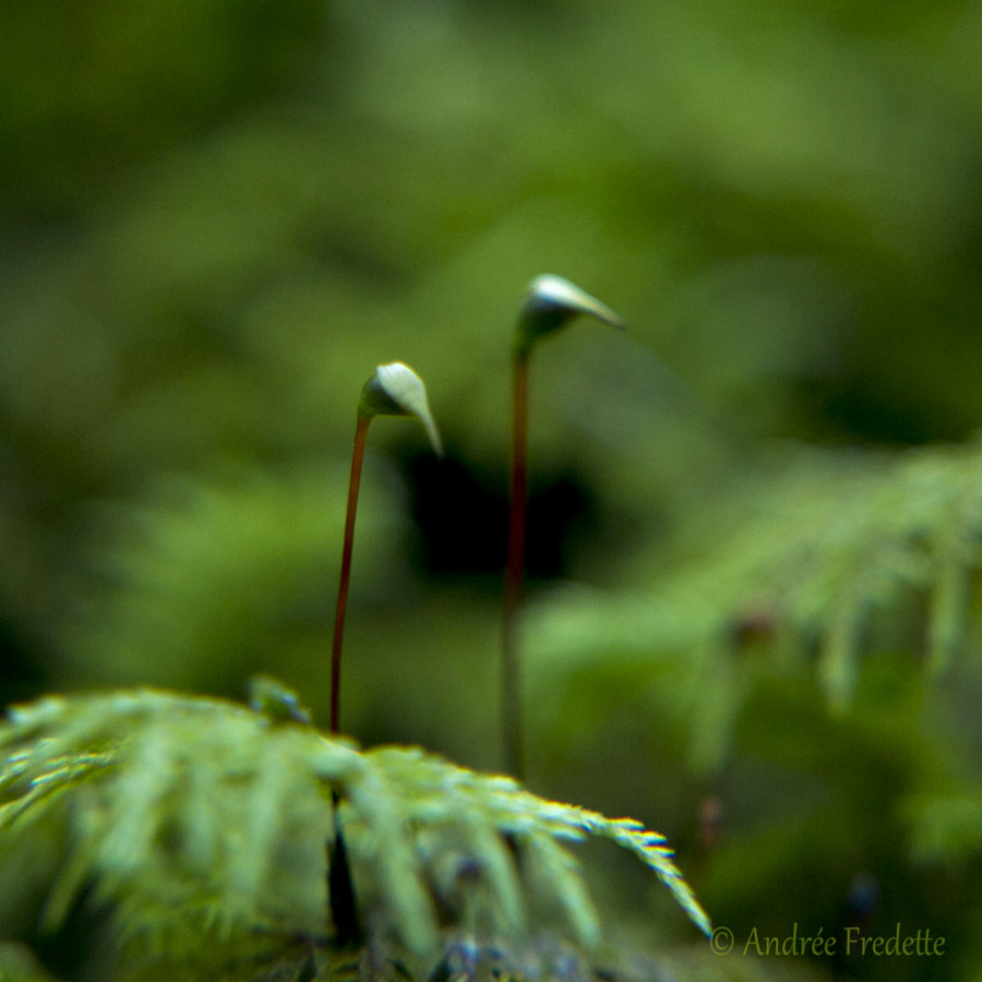 Little treasure in the moss. Photo by Andrée Fredette