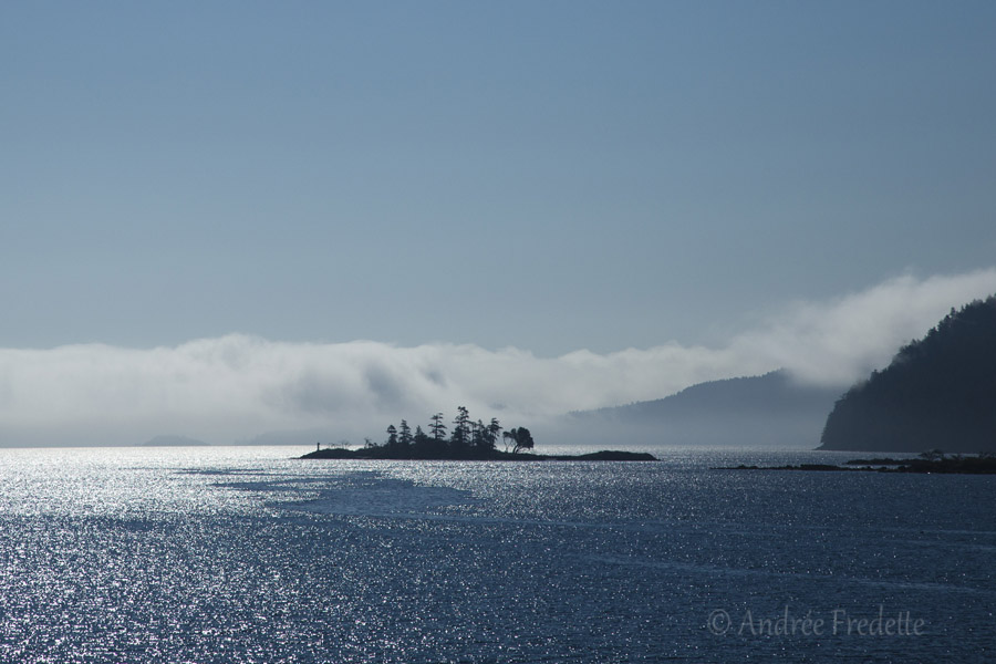 Islet in the fog, Southern Gulf Islands, BC. Photo by Andrée Fredette