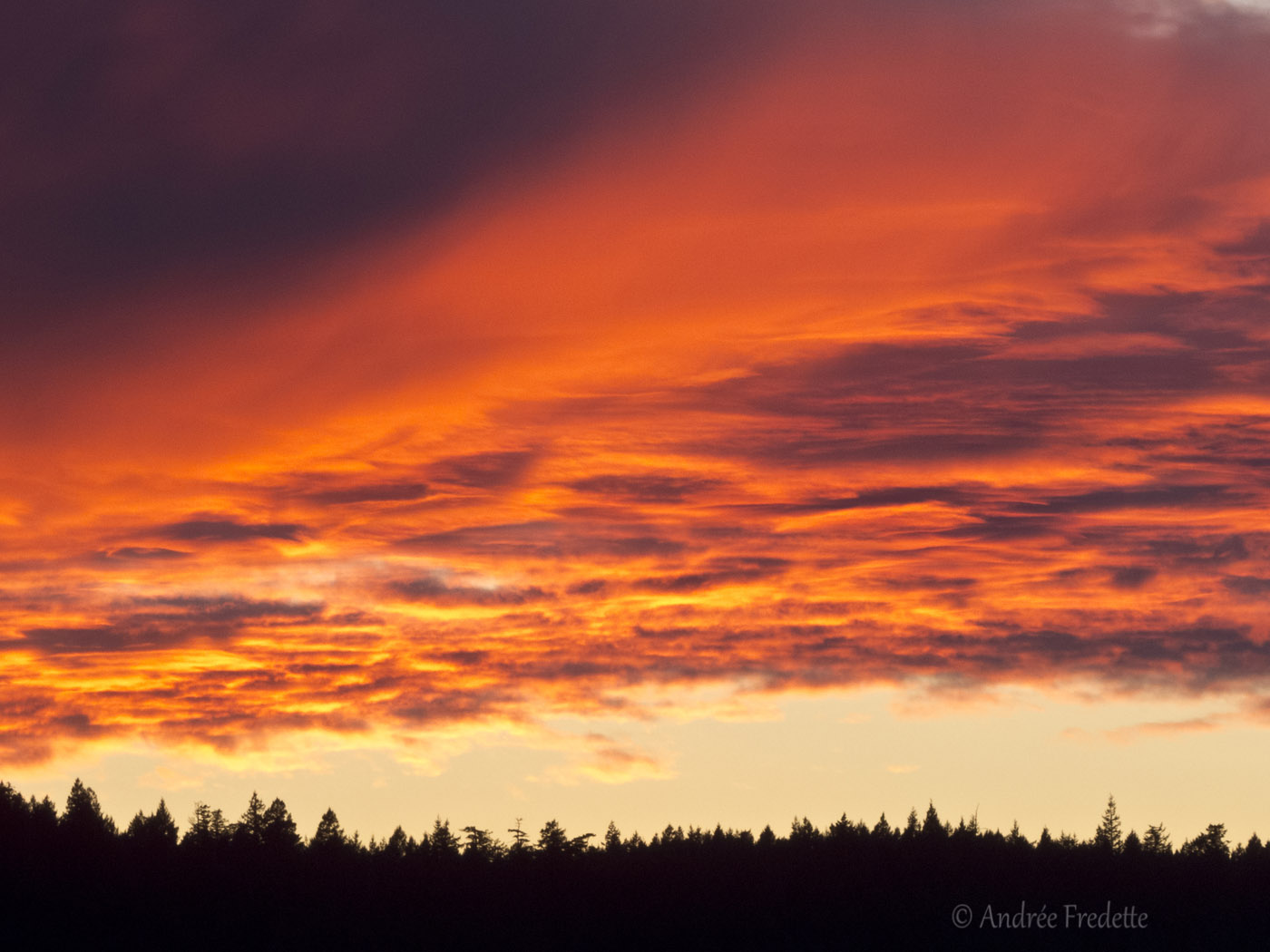 Sunset magic over Pender Island forest. Photo by Andrée Fredette