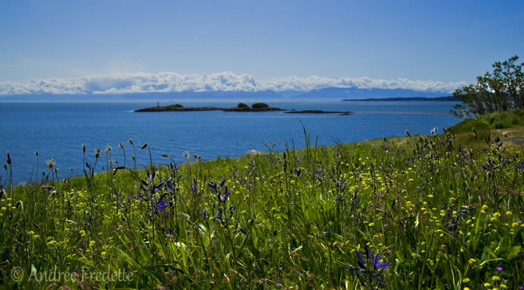 Wildflowers at Tower Point, Witty's Lagoon Regional Park, Metchosin, Vancouver Island, BC. Photo by Andrée Fredette