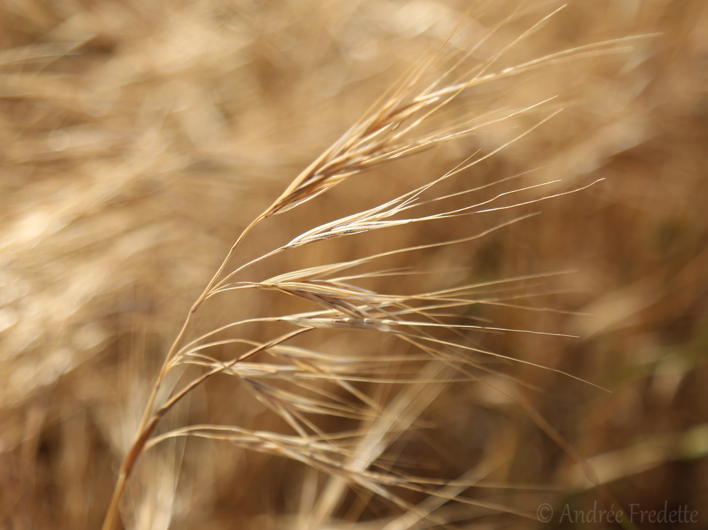 Dry grass, almost abstract. Photo by Andrée Fredette