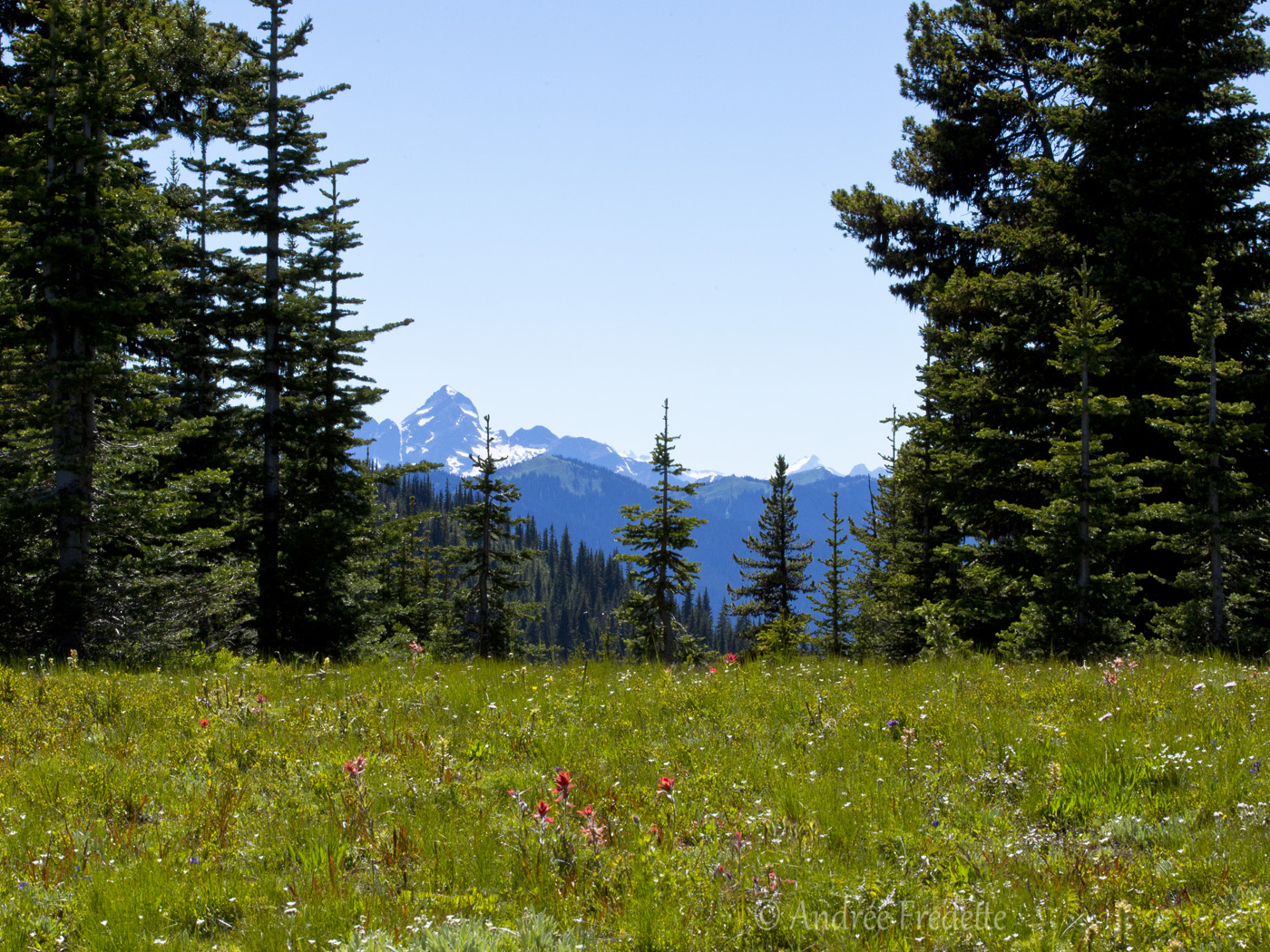 Meadow flowers, BC. Photo by Andrée Fredette