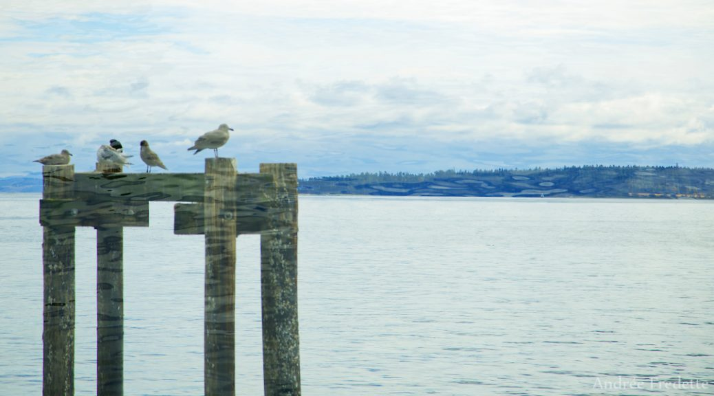 Gulls on pilings, Sidney, BC. Photo by Andrée Fredette