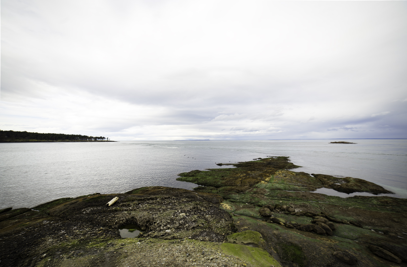 East Point, Saturna Island, at low tide. Photo © Andrée Fredette