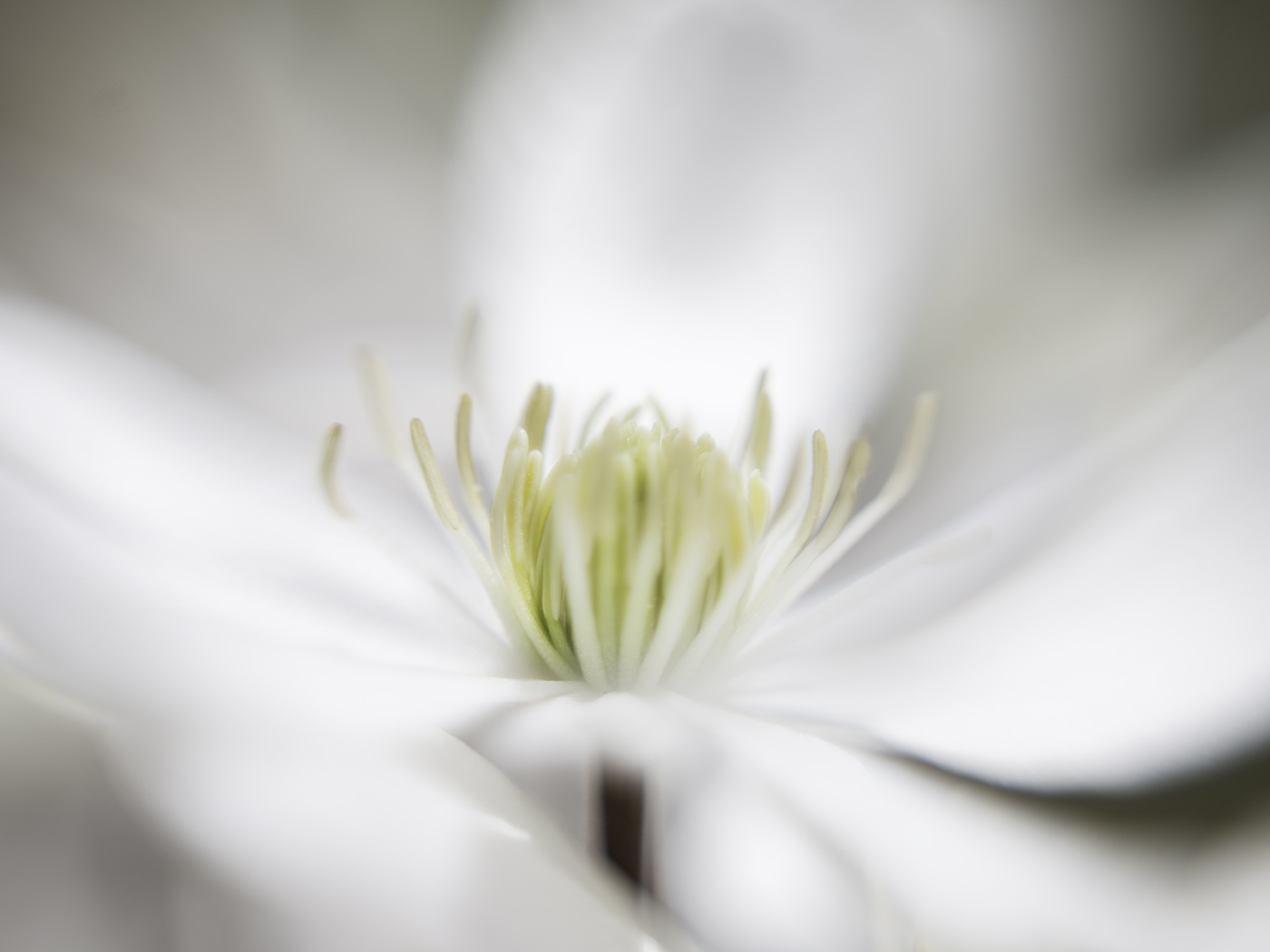 White bloom, macro photography © Andrée Fredette